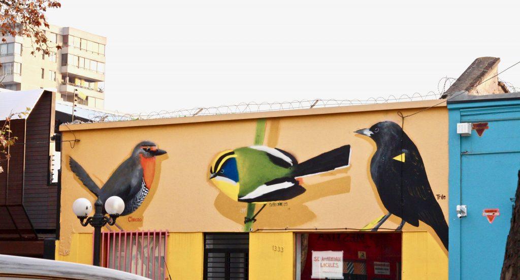 אומנות רחוב במיטבה