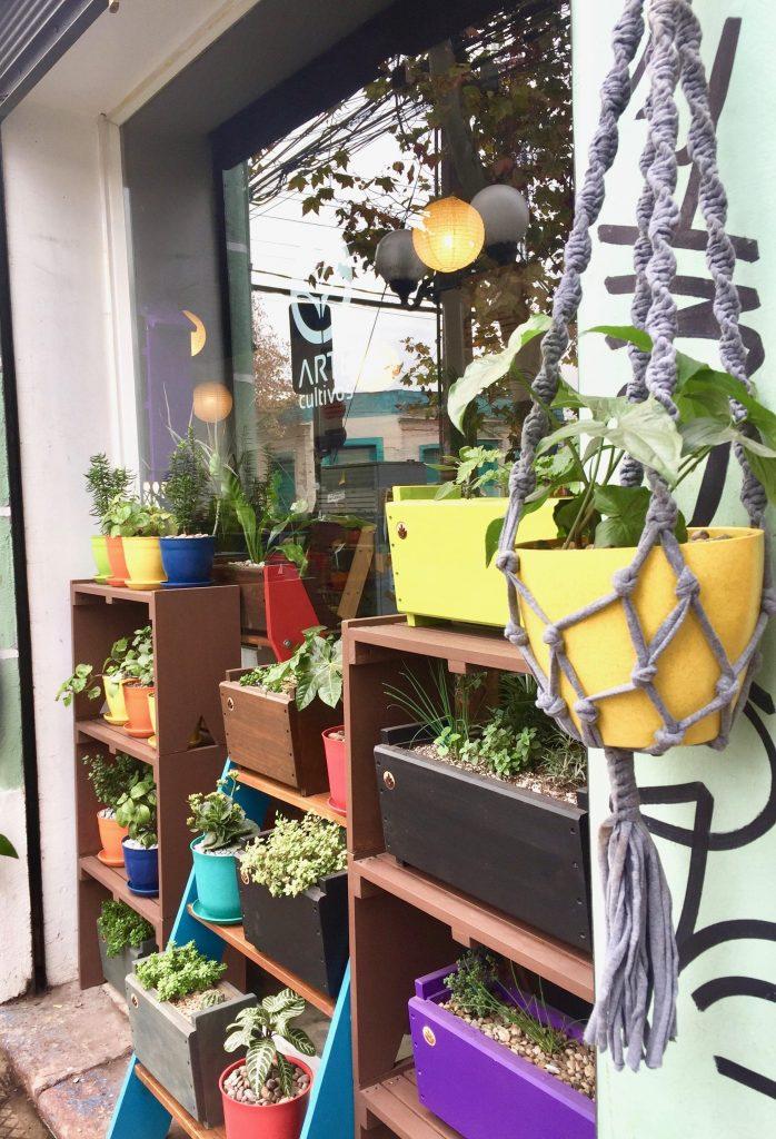 חנות עציצים שכונתית