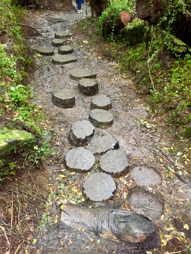 מסלול ההליכה שלנו ביער