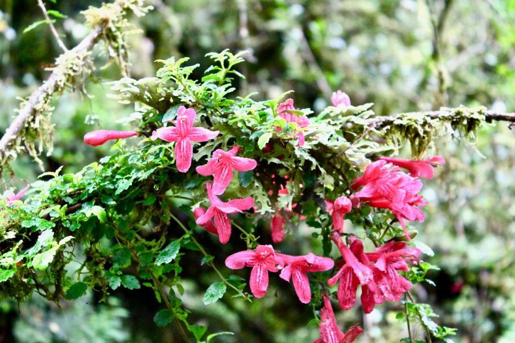 פרחים שגדלים בתוך היער על גזעי העץ