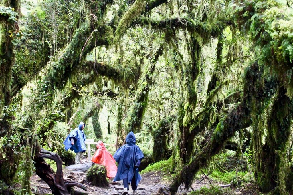גמדים ביער המכושף