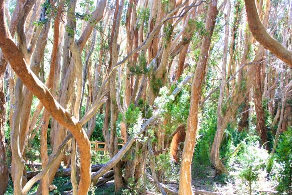 בשמורת עצי הארשן, 5 טיולי יום מברילוצ'ה