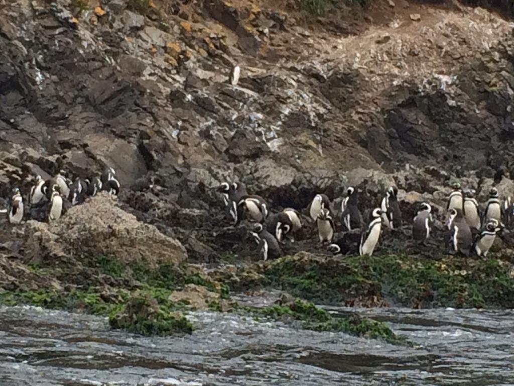 6 מקומות שאפשר לראות פינגווינים בדרום אמריקה